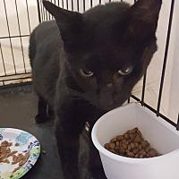 Adopt A Pet :: Willow - Berkeley Hts, NJ