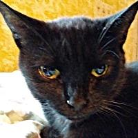 Adopt A Pet :: Gavi - Petersburg, VA