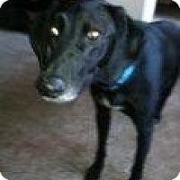 Adopt A Pet :: Duke - Alliance, NE