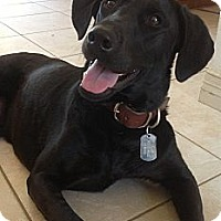 Adopt A Pet :: Lucky Loo - Aubrey, TX