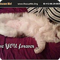 Adopt A Pet :: MIMOSA - Ft Lauderdale, FL