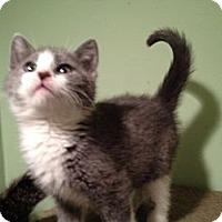 Adopt A Pet :: Nimbus - East Hanover, NJ