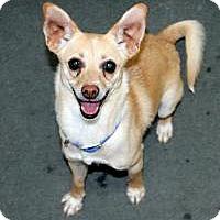 Adopt A Pet :: Layla - Cedar City, UT