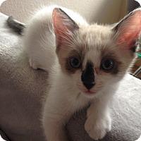 Adopt A Pet :: PIRATE - Diamond Bar, CA