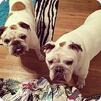 Adopt A Pet :: Cookey & Rocky - Decatur, IL
