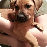 Adopt A Pet :: Riley - Marlton, NJ
