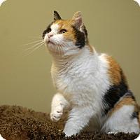 Adopt A Pet :: Tessa - Duncan, BC