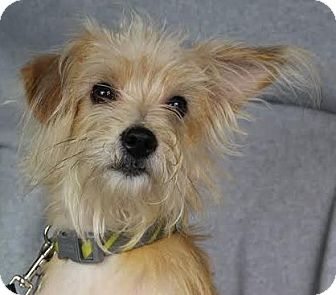 Terrier (Unknown Type, Medium) Mix Dog for adoption in Minneapolis, Minnesota - Emory
