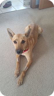 Shepherd (Unknown Type) Mix Dog for adoption in Warren, Michigan - Cleo *COURTESY POST