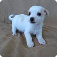 Adopt A Pet :: Sugar - Lawrenceville, GA