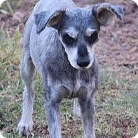 Adopt A Pet :: Dottie - Phoenix, AZ