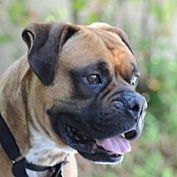 Adopt A Pet :: Leroy - Alameda, CA