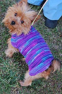 Yorkie, Yorkshire Terrier Dog for adoption in Winder, Georgia - Keenan Special needs