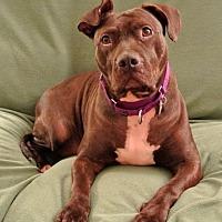Adopt A Pet :: Valerie - Livonia, MI