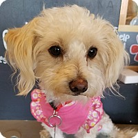 Adopt A Pet :: SIENNA - Inland Empire, CA