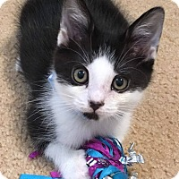Adopt A Pet :: Soldier Boy - Duluth, GA