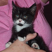 Adopt A Pet :: Stash - New Martinsville, WV