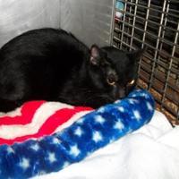 Adopt A Pet :: Gabby - Clinton, MO