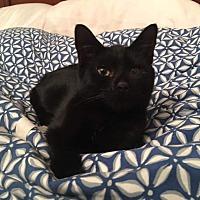 Adopt A Pet :: Thelma - Columbus, OH