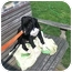 Photo 2 - Labrador Retriever/Pointer Mix Puppy for adoption in Cincinnati, Ohio - Joey: Blanchester