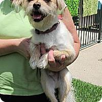 Adopt A Pet :: Peppermint - Kingwood, TX