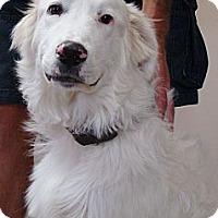Adopt A Pet :: Ozzie  *Adopted - Oklahoma City, OK