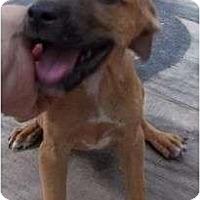 Adopt A Pet :: Flower girl - Plainfield, CT