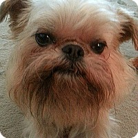 Adopt A Pet :: JAXX - ADOPTION PENDING - Los Angeles, CA