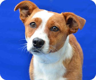Terrier (Unknown Type, Small) Mix Dog for adoption in LAFAYETTE, Louisiana - LUCY