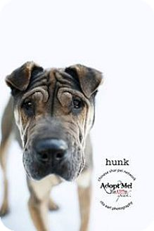 Shar Pei Mix Dog for adoption in Mira Loma, California - Hunk - pending