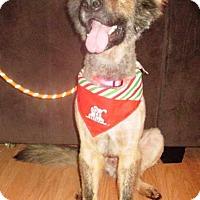 Adopt A Pet :: Tazz - Pleasant Grove, CA