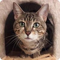 Adopt A Pet :: Anjali - Davis, CA