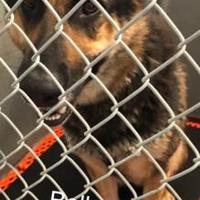 Adopt A Pet :: Bella - SMITHFIELD, NC