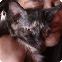 Adopt A Pet :: Dori - South Bend, IN