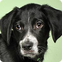 Adopt A Pet :: Nero - Crossville, TN
