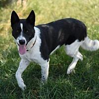Adopt A Pet :: Zola - Dodson, MT