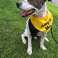 Adopt A Pet :: CLYDE - Bridgewater, NJ