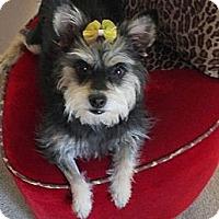Adopt A Pet :: Coco - Goodyear, AZ