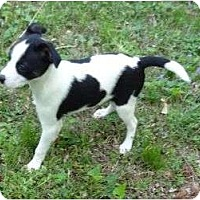 Adopt A Pet :: ID 541 - Parsons, TN