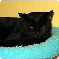 Adopt A Pet :: Boo - Medway, MA