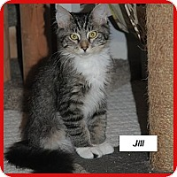 Adopt A Pet :: Jill - Miami, FL