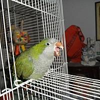 Adopt A Pet :: Bobber - Neenah, WI