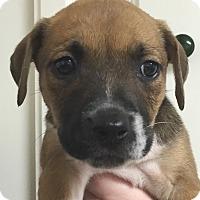 Adopt A Pet :: Calypso#07F - Orlando, FL