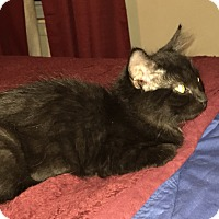 Adopt A Pet :: Jenna - Riverside, RI