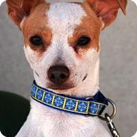 Adopt A Pet :: Mosaic - Gilbert, AZ
