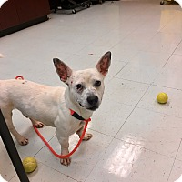 Adopt A Pet :: Stiltz - Nashville, TN