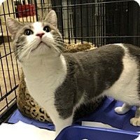 Adopt A Pet :: Hamilton - New Albany, OH
