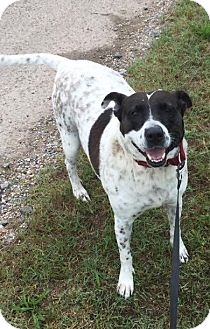 Hound (Unknown Type) Mix Dog for adoption in Natchitoches, Louisiana - Rose