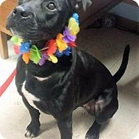 Adopt A Pet :: Nadia - Van Wert, OH