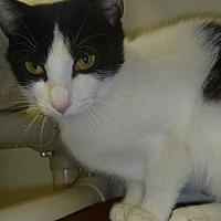 Adopt A Pet :: Karina - Hamburg, NY